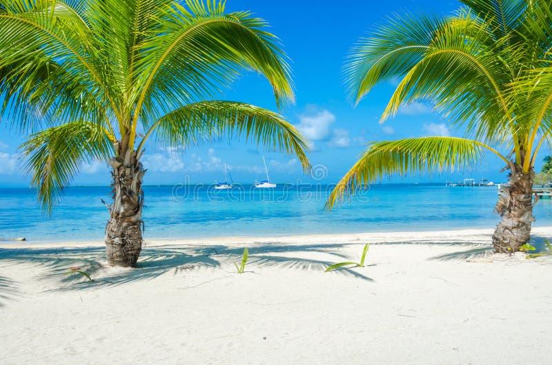 Belize Cayes zna? dla nurkowa?, snorkeling i relaksowa?, by? na wakacjach - Ma?a tropikalna wyspa przy bariery raf? z raj pla?? - fotografia royalty free