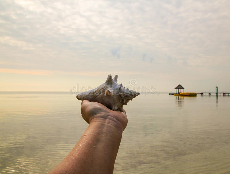 Belize Conch on Hand royalty free stock photography