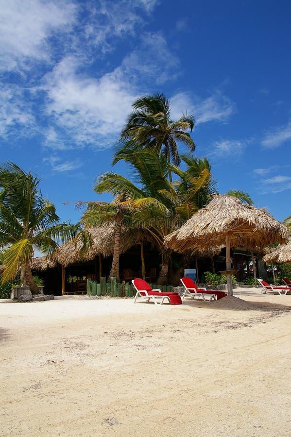 Download Belize resort stock image. Image of tree, beach, sand - 25835685