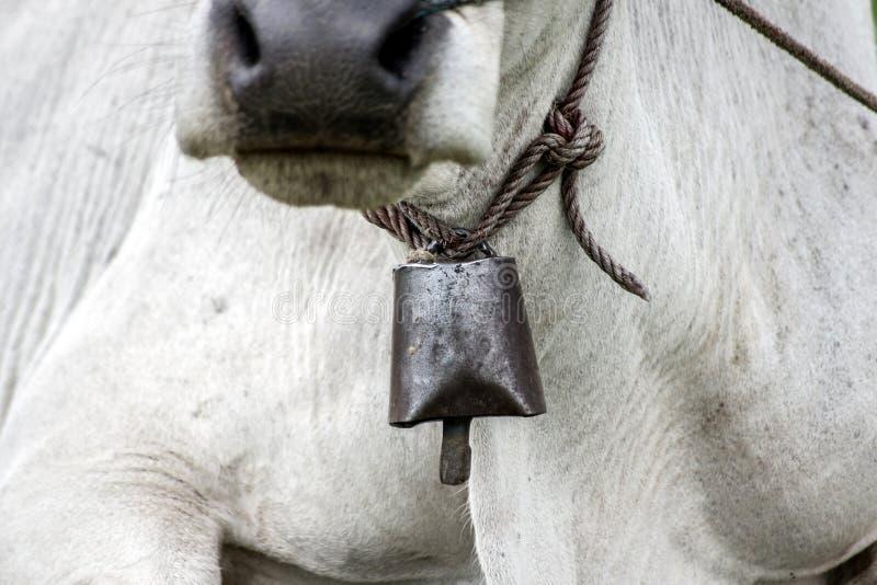Bell en el cuello de la vaca fotos de archivo