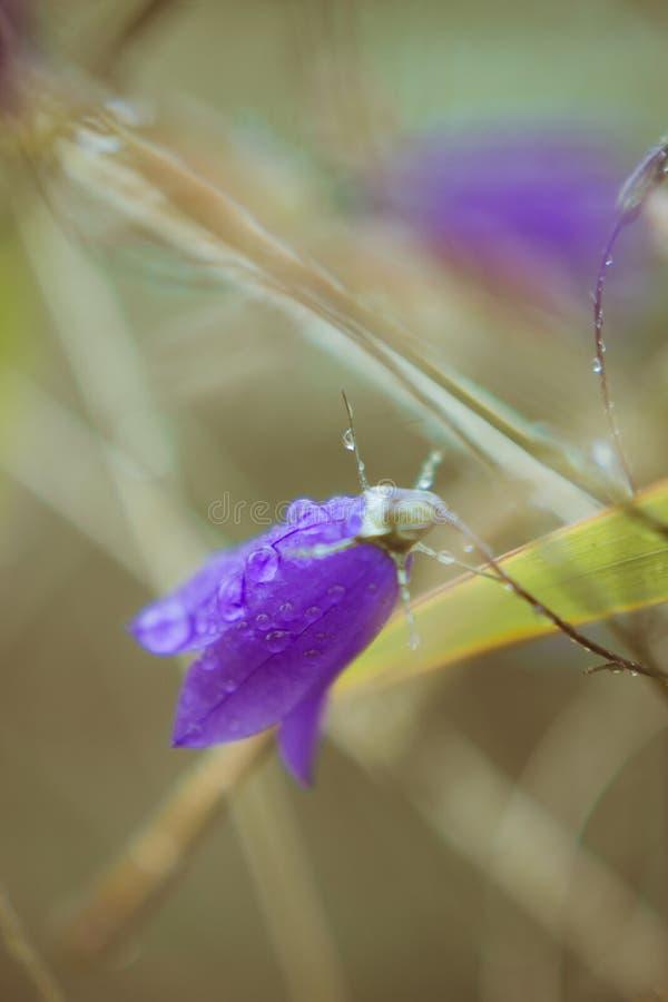 Bell-flower stock photo