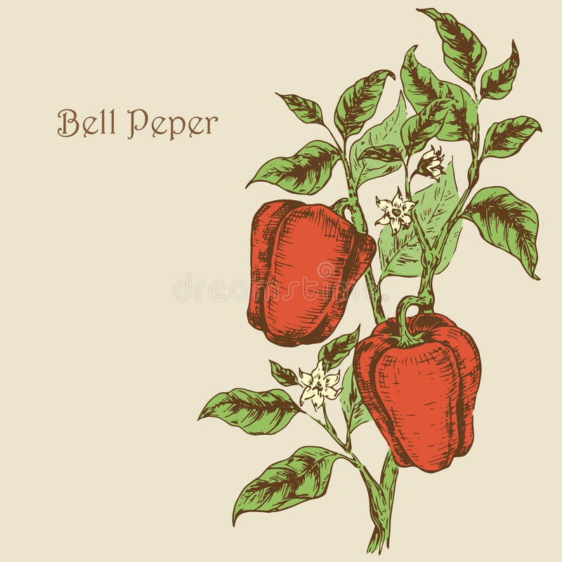 Free Bell Pepper 2 Stock Photo - 54709020