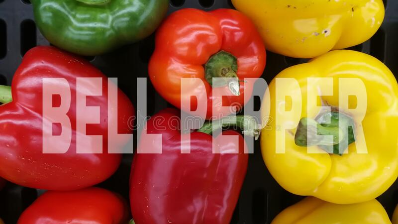 Bell pepper ( red , green , yellow ) - fruit of vegetable. Bell pepper ( red , green , yellow ) - fruit of royalty free stock image