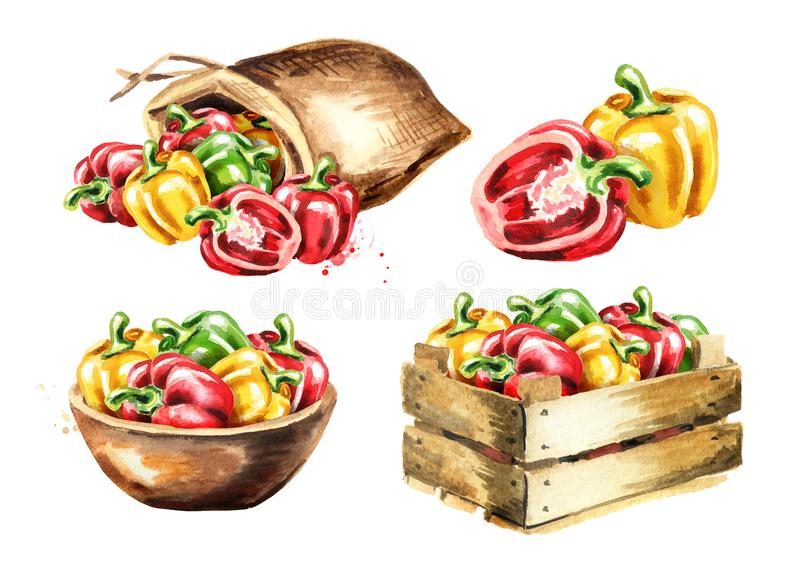 Bell peppers set. Watercolor hand drawn illustration isolated on white background royalty free stock image