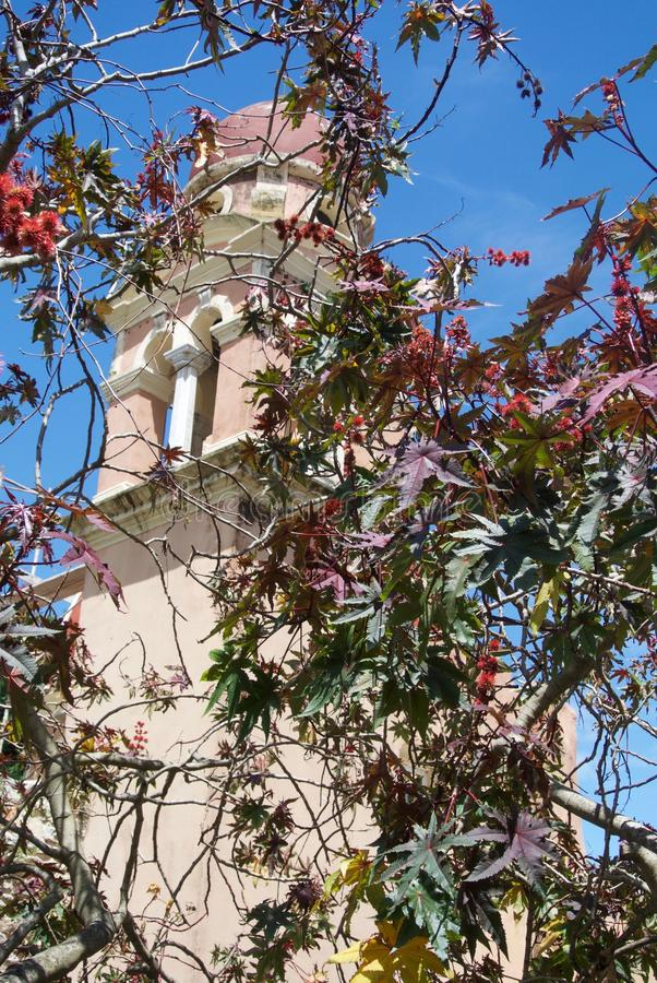 Bell tower obscured by vines in the sun stock photography