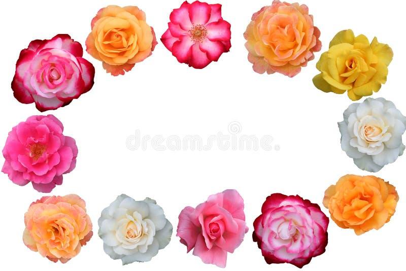Bella accumulazione dei fiori di rosa fotografia stock libera da diritti