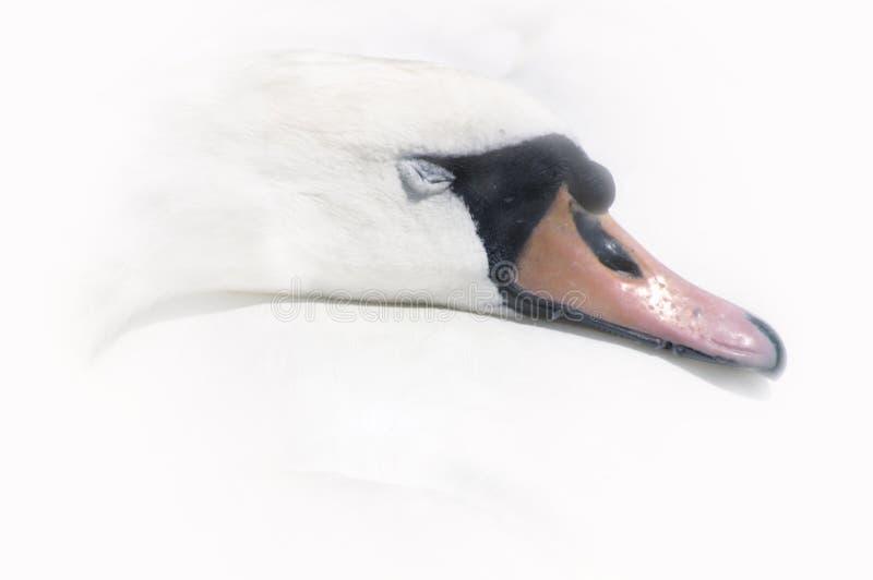 Bella addormentata - sogni dolci fotografia stock libera da diritti