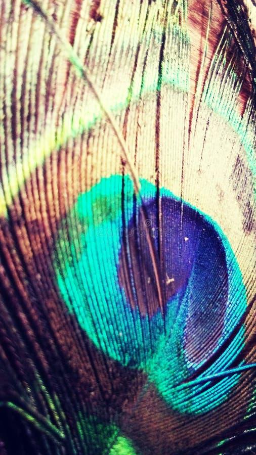 Bella ala di pavone 1 immagini stock