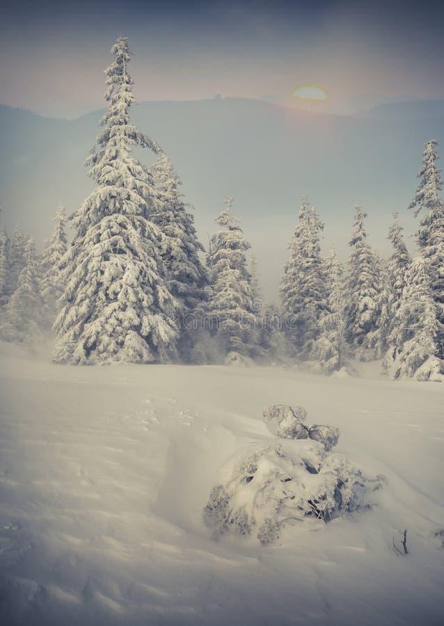 Bella alba di inverno in montagne nebbiose fotografia stock libera da diritti