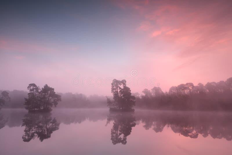 Bella alba nebbiosa rosa sopra il lago selvaggio immagine stock
