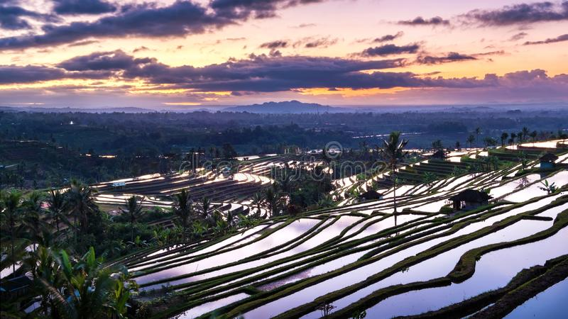 Bella alba sopra i terrazzi del riso di Jatiluwih immagini stock