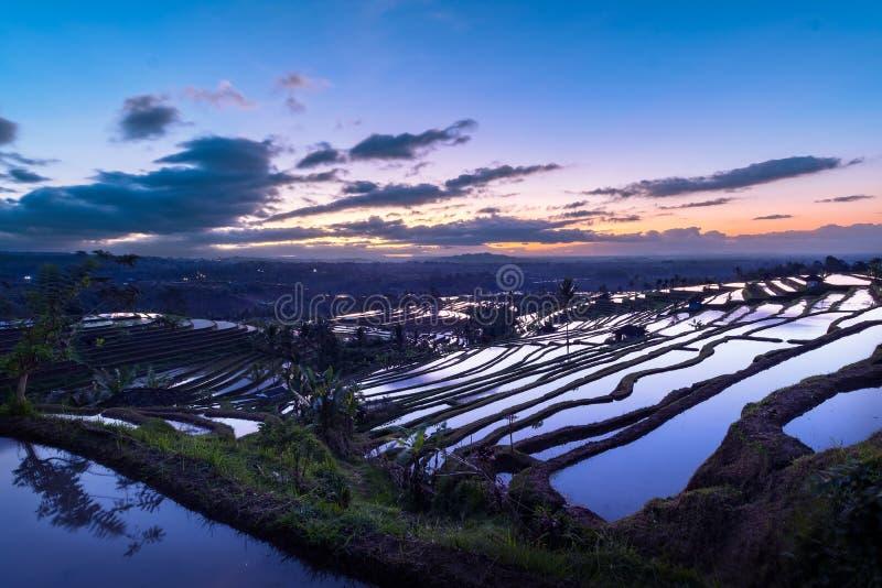 Bella alba sopra i terrazzi del riso di Jatiluwih immagine stock