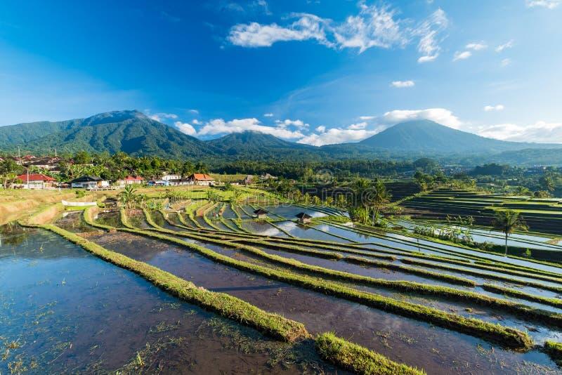 Bella alba sopra i terrazzi del riso di Jatiluwih immagine stock libera da diritti