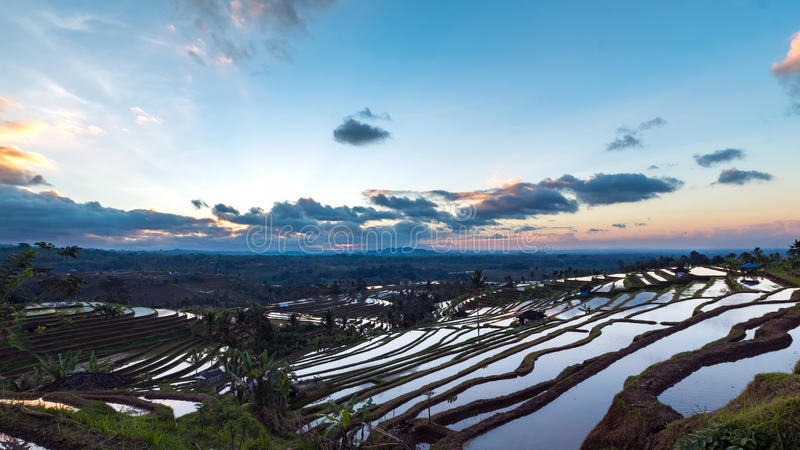 Bella alba sopra i terrazzi del riso di Jatiluwih fotografie stock libere da diritti