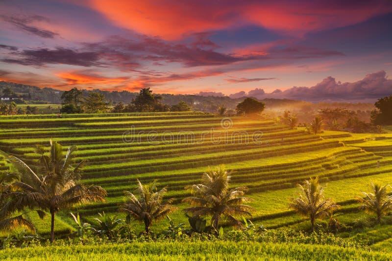 Bella alba sopra i terrazzi del riso di Jatiluwih in Bali, Indonesia immagine stock