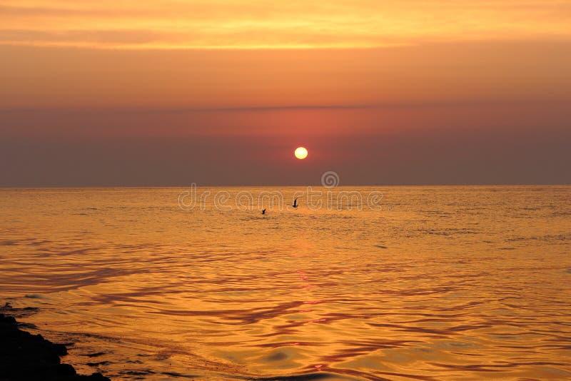 Bella alba sulla spiaggia con le onde di calma e chiari cielo porpora e gabbiani di mattina che sorvolano acqua immagine stock libera da diritti
