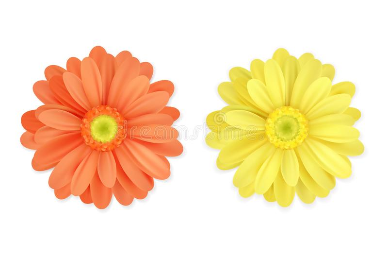 Bella arancia realistica e fiori gialli isolati su fondo bianco Immagine di vettore royalty illustrazione gratis