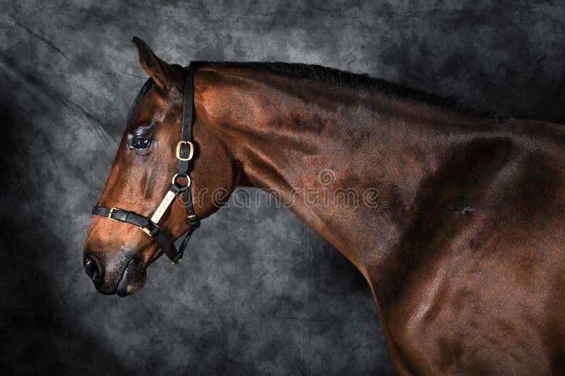 Bella arte del caballo de bahía imagen de archivo