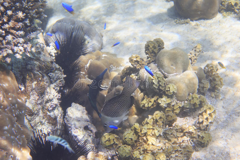 Bella barriera corallina con il pesce Oceano Indiano vicino immagine stock