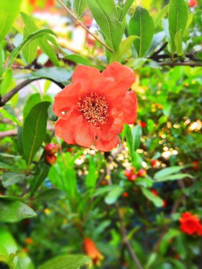 Bella bellezza d'accensione di luce del giorno del fiore fotografia stock
