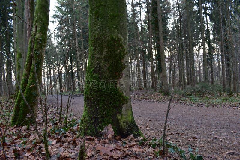 Bella campagna degli alberi immagini stock libere da diritti