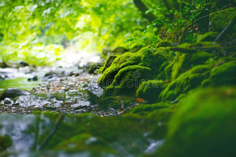 Bella campagna verde La cascata su un fiume con le grandi rocce ed il verde di foresta deciduo abbelliscono immagini stock