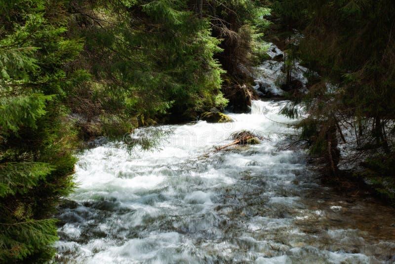 Download Bella Cascata In Legno Di Tatry Fotografia Stock - Immagine di europa, poland: 30828020
