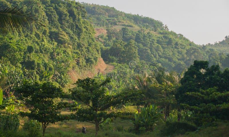 Bella collina in Indonesia blitar fotografie stock