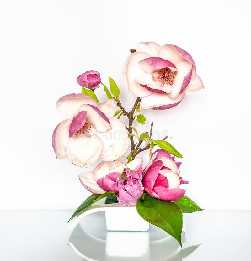 Bella composizione floreale con la magnolia rosa immagini stock libere da diritti