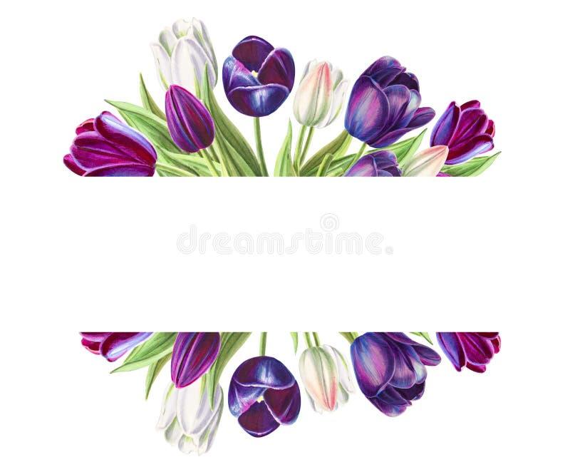 Bella cornice di testo dai tulipani bianchi e neri Disegno dell'indicatore Pittura dell'acquerello illustrazione di stock