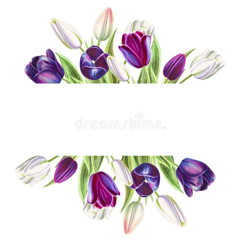 Bella cornice di testo dai tulipani bianchi e neri Disegno dell'indicatore Pittura dell'acquerello royalty illustrazione gratis