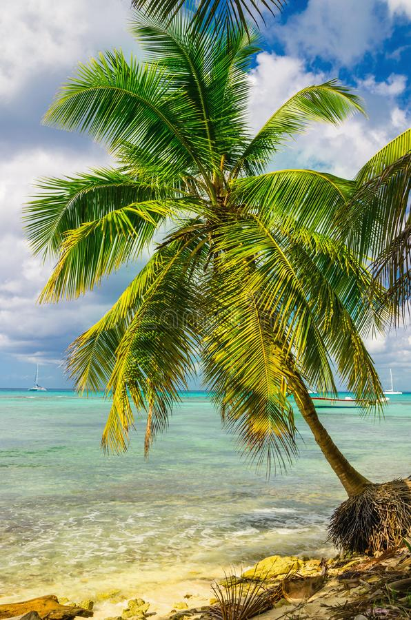 Bella costa caraibica esotica con la palma stupefacente, Repubblica dominicana, immagine stock libera da diritti