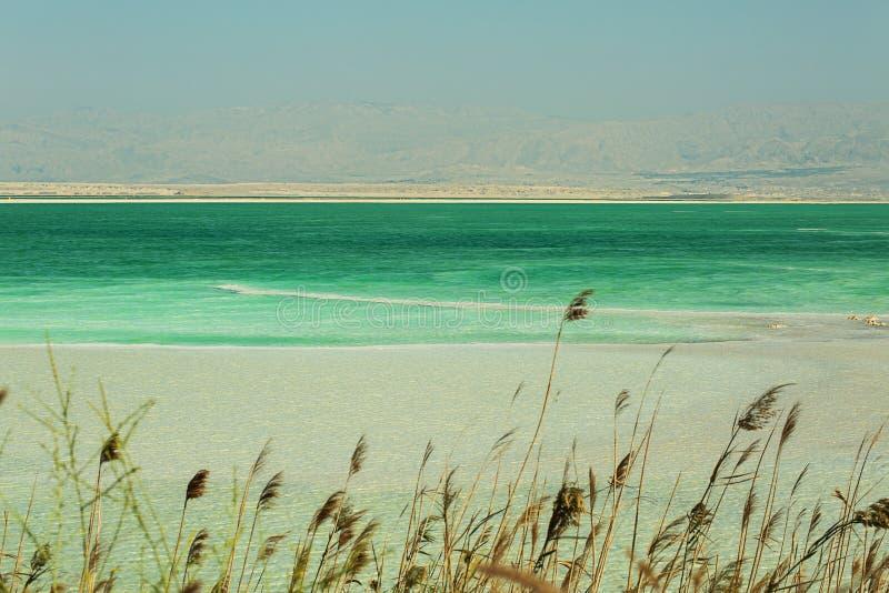 Bella costa del mar Morto fotografia stock libera da diritti