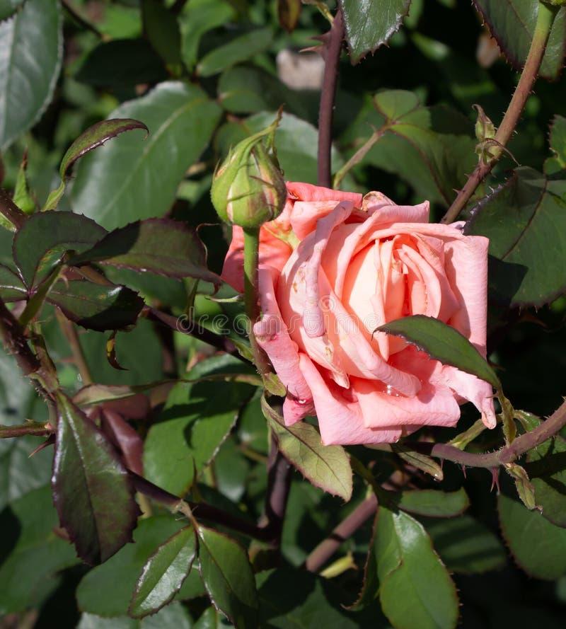 Bella crescita di fiori in un'aiola, un regalo di compleanno immagini stock libere da diritti