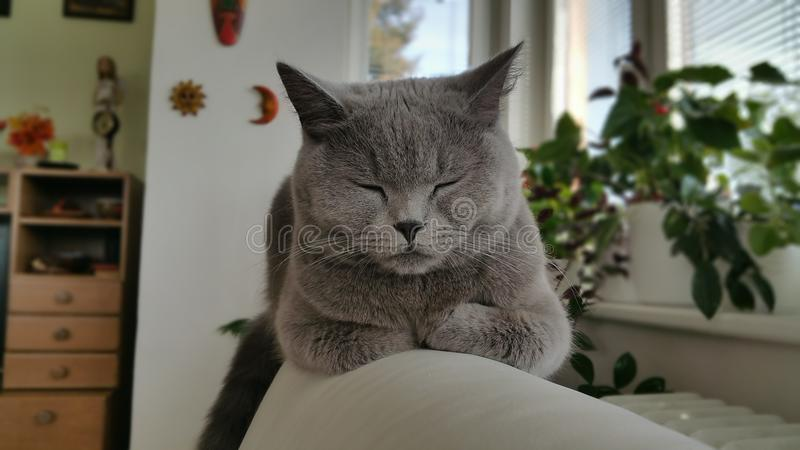 Bella Cute Cat photographie stock