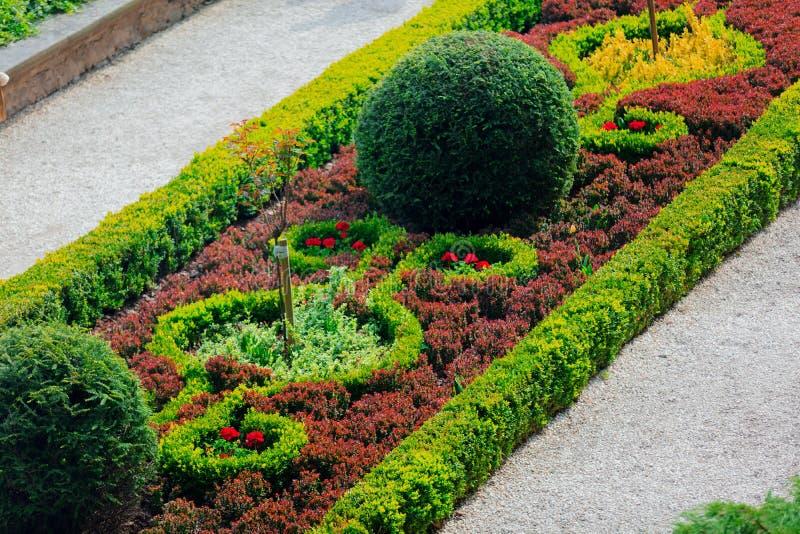 Bella decorazione del giardino dei cespugli e dei fiori fotografia stock libera da diritti