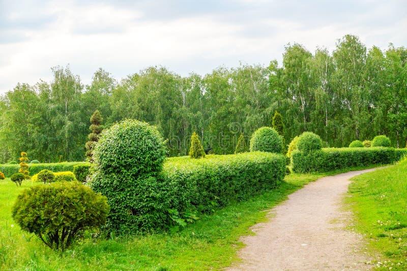 Bella decorazione di arte del giardino sul fondo esotico degli alberi del fiore nel parco Paesaggio di arte dell'ars topiaria immagini stock libere da diritti