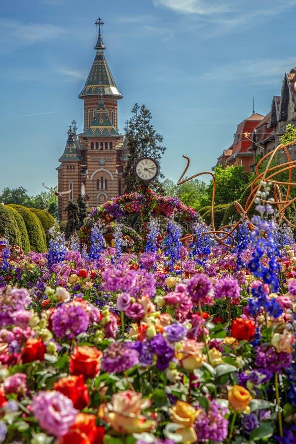 Bella decorazione floreale in Timisoara, Romania immagine stock libera da diritti