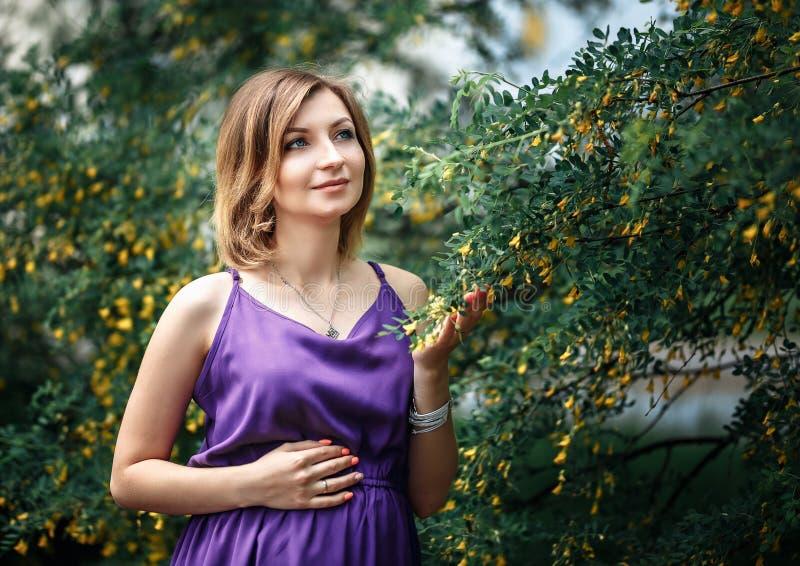 Bella donna europea incinta in vestito viola porpora, stante vicino ai cespugli dell'acacia con i piccoli fiori gialli, colori de fotografia stock