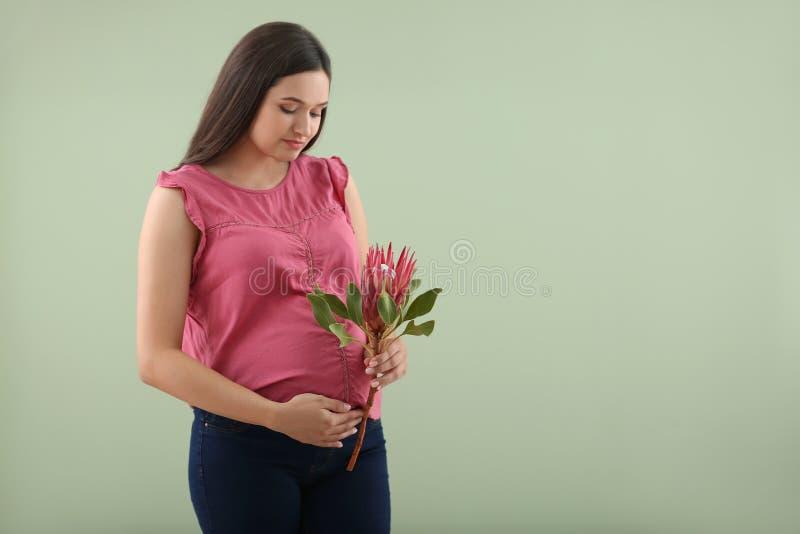 Bella donna incinta con il fiore sul fondo di colore fotografia stock libera da diritti