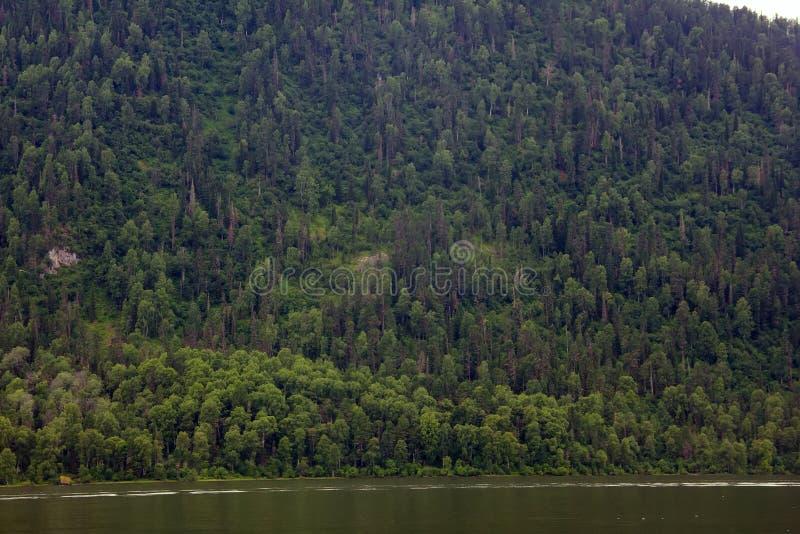bella e del moumtain foresta a distanza del lago tettonico della montagna - fotografia stock libera da diritti