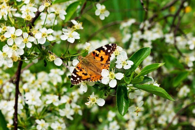 Bella e farfalla colourful fotografia stock
