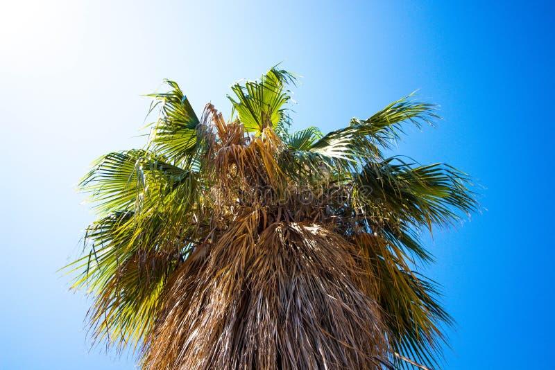 Bella e palma alta con le grandi foglie fotografia stock