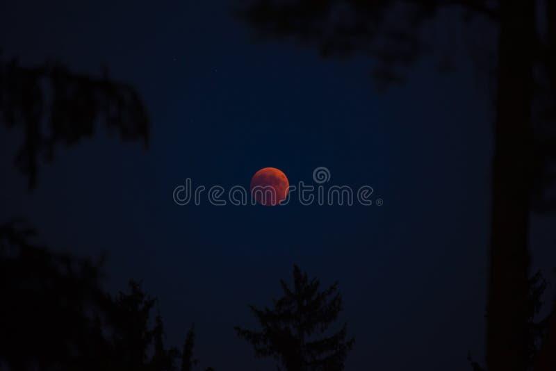 Bella eclissi solare fotografia stock