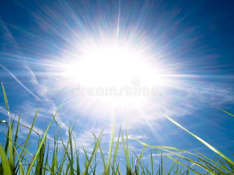 Bella erba fresca contro il sole alla sorgente fotografia stock libera da diritti
