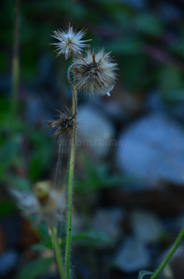 Bella erba, grasss marroni fotografia stock