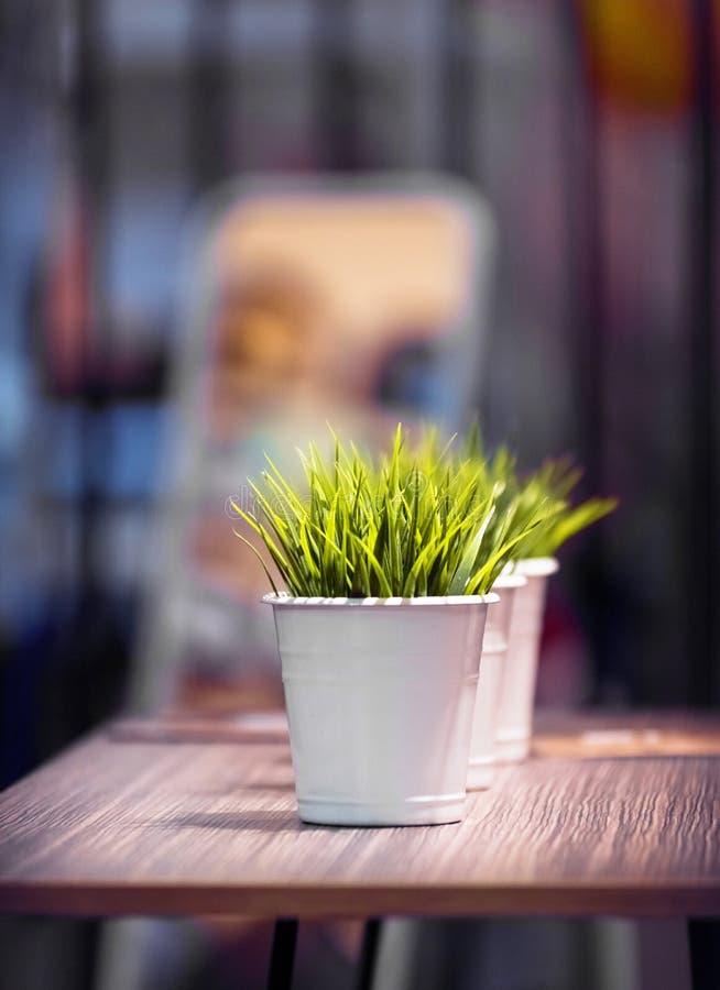 Bella erba verde decorativa nel secchio nell'ambito della luce fotografie stock libere da diritti