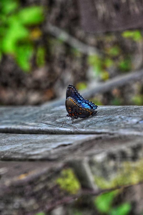 Bella farfalla fotografia stock