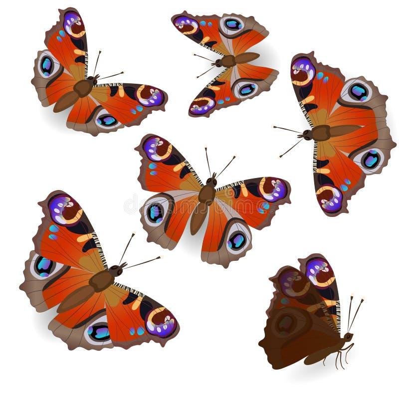 Bella farfalla di pavone isolata su fondo bianco nelle posizioni differenti, in volo e nella seduta Immagini di vettore Usato As royalty illustrazione gratis