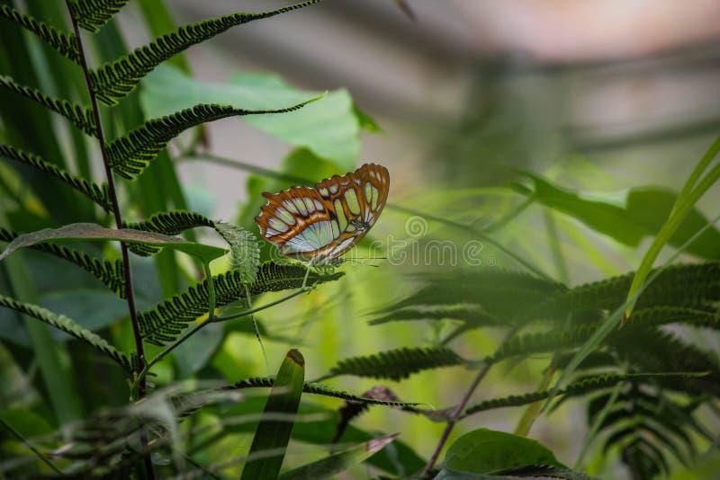 Bella farfalla, foglia verde, circondata da fogliame, fondo verde fotografia stock